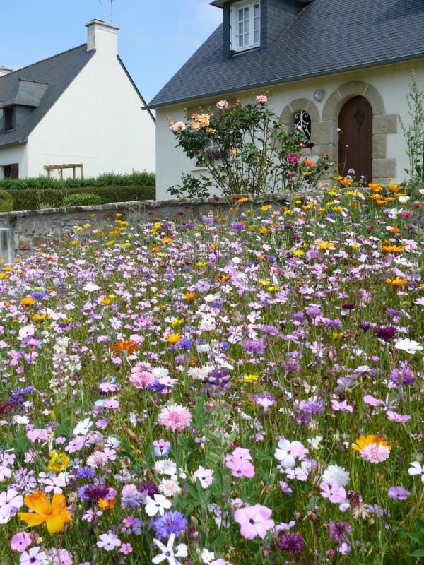 mehrjährige blumenwiese anlegen - deutschland trends, Gartengerate ideen