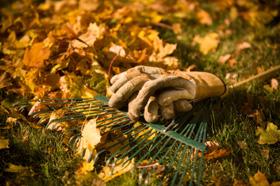 Gartenarbeiten Herbst