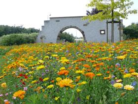 Nova_flore_blumenwiese.jpg Blumenwiese Anlegen Garten