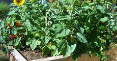Reich bepflanztes Hochbeet